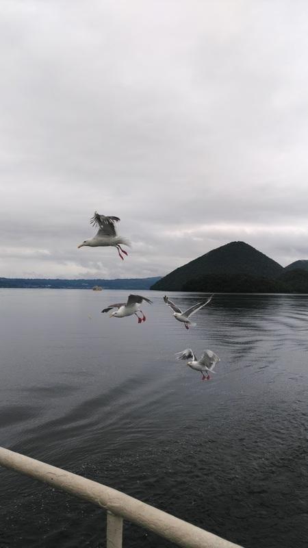 遊覧船と鳥